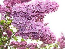 紫色的花高清图片5