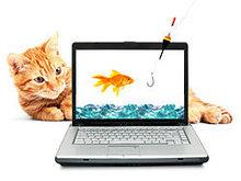 猫与金鱼高清图片3