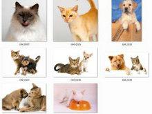 一组猫咪和狗狗的高清图片