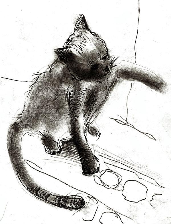 手绘线稿猫高清图片4