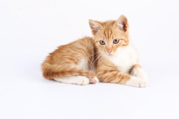 可爱猫咪高清图片3