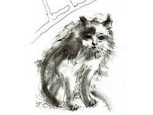 手绘线稿猫高清图片1