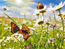 蝴蝶花高清图片5