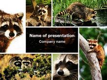 保护动物PPT模板免费下载