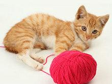 可爱猫咪高清图片2