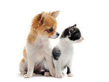 可爱的宠物高清图片5