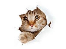 搞笑动物图片高清图片6