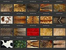 各种动物毛皮、纹理图片素材