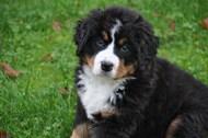 草地宠物狗狗图片