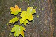 秋叶图片 秋叶图片大全