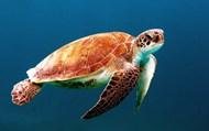 海龟的图片 海龟的图片大全