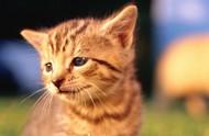 小花猫图片
