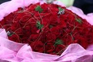 99朵玫瑰花图片