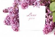 卡片与丁香花图片