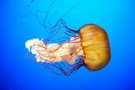 水母唯美图片