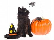 万圣节小猫图片