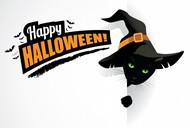 万圣节黑猫背景图片