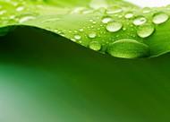 清新绿叶水滴背景图片