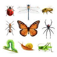 卡通昆虫图标矢量图片