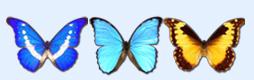 精美蝴蝶图标