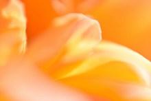 黄色花瓣微距高清图片