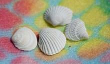 漂亮白色贝壳高清图片