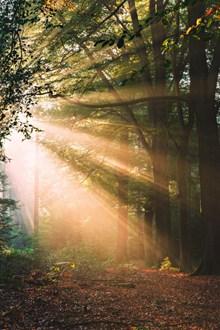 逆光非主流树林风景图片下载