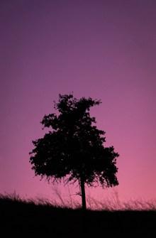 一棵大树剪影图片下载
