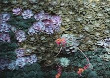 多品种多肉植物图片素材