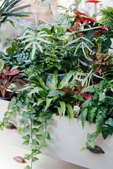 绿色花草植物盆栽图片下载