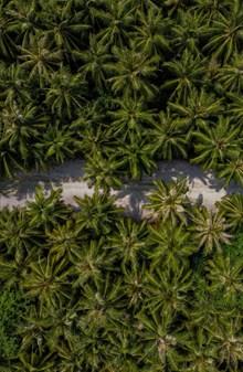 茂盛绿色树林航拍图高清图