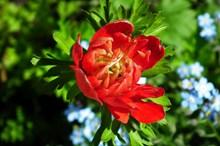 红色海葵花微距摄影图片下载