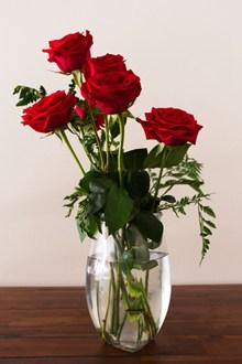 水培红色玫瑰花高清图片