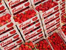 新鲜牛奶草莓批发高清图
