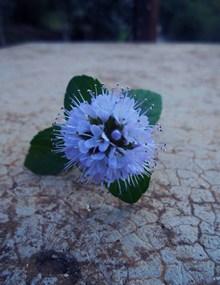非主流唯美紫色花朵 非主流唯美紫色花朵大全图片素材