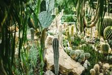 绿色带刺仙人掌植物图片大全