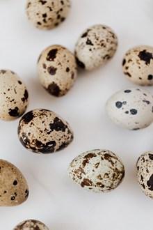 新鲜鹌鹑蛋图片