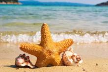 海边沙滩海星海螺图片大全