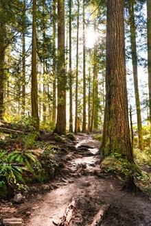 清晨原始树林精美图片