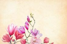 复古兰花背景图片素材