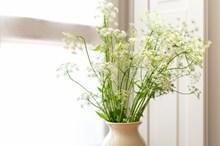白色插花静物精美图片