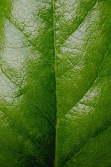 绿色树叶纹理微距图片素材