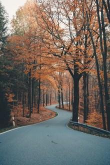 秋季公园风景图片下载