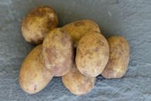 生土豆蔬菜高清图