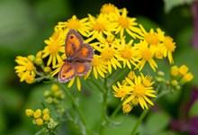 黄色鲜花与蝴蝶高清图片
