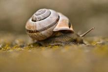 小蜗牛可爱摄影精美图片