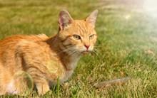 草地上呆萌小猫图片素材