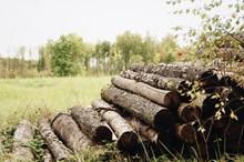 草地上堆着一堆木头图片下载