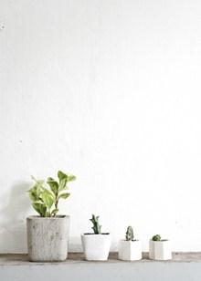 白色简约风盆栽花卉图片大全