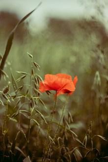 风中摇曳的花朵图片